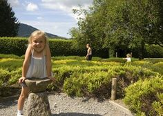 Cumbria's Living Heritage, a vibrant group of Cumbrian heritage attractions, museums and history-rich great houses, is providing a buzz ahead of the July 10 'Don't Step on a Bee' Stuff To Do, Things To Do, Family Days Out, Rare Plants, Lake District, Christmas And New Year, Cumbria News, Bee, July 10