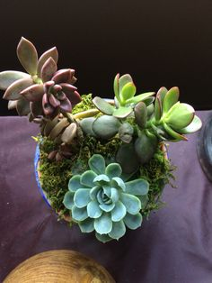 Instagram @scottyssucculentshop www.facebook.com/scottyssucculentshop