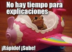 ¡Rápido, sube! #ImagenDelDia - Cachicha.com