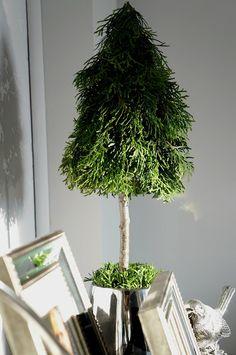 Choinki z gałęzi tui Small Christmas Trees, Christmas Time, Christmas Crafts, Xmas, Tree Decorations, Christmas Decorations, Holiday Decor, How To Dry Basil, Flower Arrangements