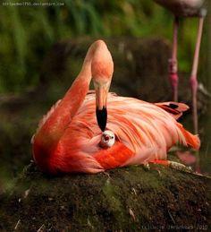 Las Mejores Fotografías del Mundo: Vida animal.....