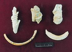 Shell bangles and other jewellery....Important historical links