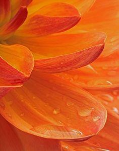 Orange Aesthetic, Rainbow Aesthetic, Aesthetic Colors, Orange Gris, Burnt Orange, Orange Color, Orange Orange, Yellow, Image Beautiful