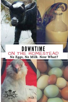 """I added """"Downtimes on The Homestead. No Eggs, No Milk! Now """" to an #inlinkz linkup!http://back2simplelife.com/2016/11/cooking-with-no-eggs-no-milk/"""