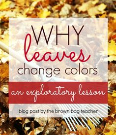Science experiments STEM to help students understand why leaves change colors