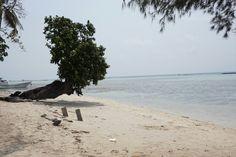 Guys, look at that tree! Wonderful, huh?  :) i love it
