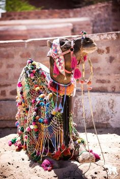 Morocco - adorned camel, wld be so cool if could do this to our alpacas :)