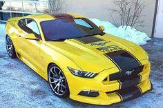 Mustang ~ 50 years