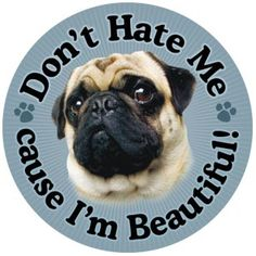 """Don't hate me because I'm beautiful"" 5 7/8 inch magnet fawn  ""Don't hate me because I'm beautiful"" 5 7/8 inch round Magnet! This is beautiful artwork on this magnet and it will stick were ever a magnet can stick. Show your pug pride and make a purchase. All proceeds benefit the pugs at Pug Rescue Network. Free shipping USA only!!"