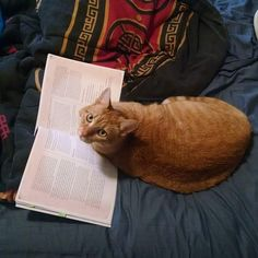 My cat is just as much of a nerd as I am