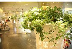 parkERs  グリーンを活かした空間デザイン、オフィスの室内緑化ならパーカーズ   ギャラリー