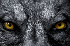 7 Bloodcurdling Werewolf Tales That Will Keep You Up At Night ...