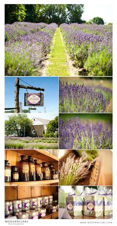 Carousel Lavender Farm, Bucks County, PA #places #lavender #buckscounty    FB: https://www.facebook.com/pages/Carousel-Farm-Lavender/