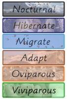 Header cards for sorting: Nocturnal, Migrate, Hibernate, Adapt, Oviparous, Viviparous, Mammal, Bird, Fish, Amphibian, Mollusca, Reptile, Arthropoda.