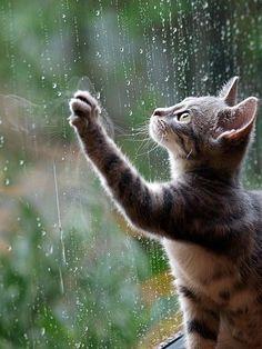 [F] 猫が可愛い。窓についた雫も綺麗でとても癒される写真だ。