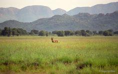 #Namibia #GocheGanas #RedHartebeest