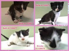 **NEED PLACEMENT BY 6PM** 4 Adorable Black and White Bottle Babies! @MACC