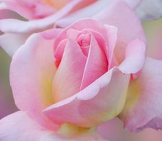 Marilou Aballe Most Beautiful Flowers, Love Flowers, Beautiful Images, Spring Color Palette, Spring Colors, Spring Images, World Images, Light Spring, Mothers Love