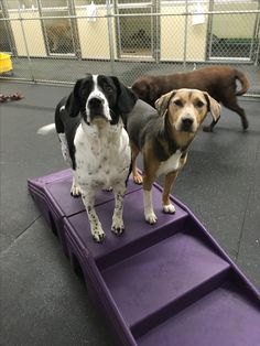Charlie and Autumn sharing a bench #❤️ #DogFriends #DoggieDaycare #PuppyLove  #CutenessAlert