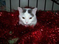 Xmas Kitty 2013