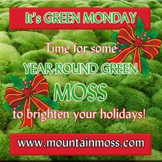 Moss For Sale, Moss Garden, Landscaping, Gardening, Holiday, Green, Diy, Vacations, Bricolage