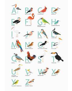 Fowl Alphabet print illustration obtain Animal Alphabet, Alphabet Print, Alphabet Posters, Alphabet Worksheets, Creative Illustration, Bird Illustration, Graphic Design Illustration, Alfabeto Animal, Bird Theme