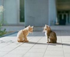 Incontro felino