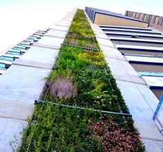 Neuer Trend in Kolumbien: Grüne Dächer und Fassaden sollen Lebensqualität verbessern