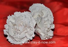 white carnations are symbol of pure love, good luck and innocence.