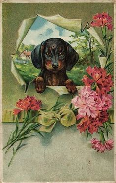 Cute Dachshund Dog with Many Flowers Vintage Artist Postcard CA 1910'S | eBay