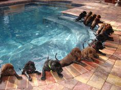 swimming pups