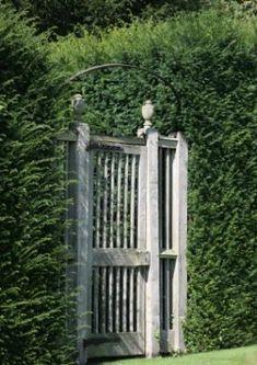 Shrubbery for a country garden