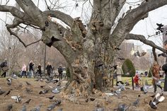 """A composite photograph of Squirrels and pigeons in Boston Public Garden. Photographer Pelle Cass combines hundreds of exposures to create a ."" These photos are AMAZING. Editorial Photography, Street Photography, Travel Photography, Boston Public Garden, Wtf Moments, Unique Trees, Photoshop, Photo Series, Documentary Photography"