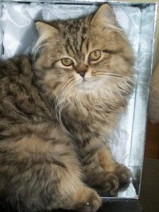 Mihriban's cat
