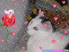 Gatito enamorado