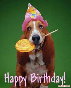 Funny happy birthday quotes comment 36 new Ideas Funny Happy Birthday Wishes, Happy Birthday Pictures, Happy Birthday Greetings, Birthday Cartoon, Dog Birthday, Funny Birthday, 15th Birthday, Basset Hound, Basset Dog