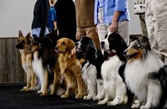 Most Important Dog Training Skills. Learn all about training your pet, including puppy training, dog obedience training and cat training and behavior. Dog Training School, Basic Dog Training, Dog Training Classes, Training Your Puppy, Training Online, Training Kit, Training Dogs, Toilet Training, Agility Training