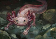 axolotl - Google Search