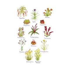 Carnivorous Plants Field Guide Art Print Bog Garden, Garden Plants, House Plants, Garden Gates, Garden Beds, Unusual Plants, Exotic Plants, Unusual Flowers, Organic Plants