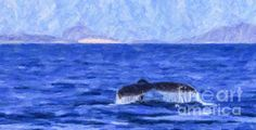 A Humpback Whale, Megaptera novaeangliae, fluking in the Gorda Banks area of the Pacific Ocean / Sea of Cortez off Baja California Sur, Mexico. Humpback Whale, Baja California, Newfoundland, Pacific Ocean, Sri Lanka, Dolphins, Banks, Wilderness, Digital Art