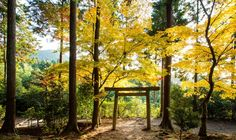 Enkoji-Temple,-famous-for-its-autumn-colours. — ThePlanthunter