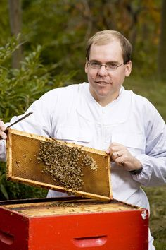 Sweet news about honey bee research. News Source, British Columbia, Bee, Honey, Food, Honey Bees, Essen, Bees, Meals