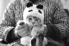 kitty dressed as a panda!!! OMG!! My cat would hate me.... but it would be such an adorable pouty face!