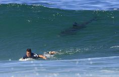 Deadliest Shark Attack Beaches