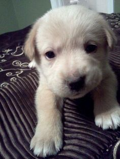 Why is everyone pinning cute puppies.. i can't resist the repin of them..