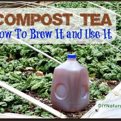 Compost Tea - What It Is, How to Make It, and the Benefits