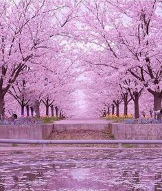 Chiba, Japan Photo by Tag your friends . Photo Japon, Japan Photo, Beautiful World, Beautiful Places, Beautiful Pictures, Wonderful Places, Beautiful Nature Wallpaper, Beautiful Landscapes, Cherry Blossom Japan