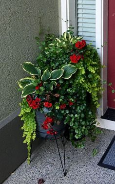 Advice, methods, including quick guide beneficial to receiving the most effective result and also coming up with the maximum use of Landscaping Hedges Container Flowers, Flower Planters, Container Plants, Flower Pots, Outdoor Flowers, Outdoor Planters, Outdoor Gardens, Front Porch Plants, Garden Yard Ideas