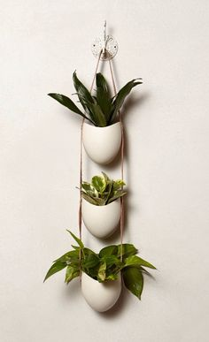 Leather-Latched Wall Planter