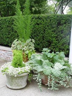 Container Gardening Ideas Whitish grouping against darker patio, fence, or green background would look great. Also consider pot color. Container Flowers, Container Plants, Container Gardening, Evergreen Container, Container Design, Vegetable Gardening, Outdoor Plants, Outdoor Gardens, White Gardens